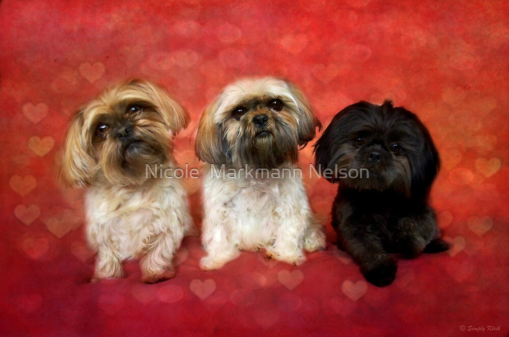 Lovely Trio  by Nicole  Markmann Nelson