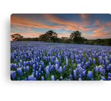 Texas Bluebonnets in the Hill Country 1 Canvas Print
