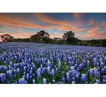 Texas Bluebonnets in the Hill Country 1 Photographic Print