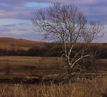 Flint Hills View by Galen Obermeyer