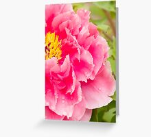 tree peony in pink Greeting Card