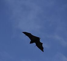 Flying Fox by ©Josephine Caruana