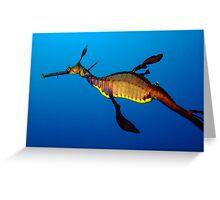 Weedy Seadragon (Phyllopteryx taeniolatus) Greeting Card