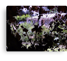 Looking Through a Fallen Leaf Canvas Print