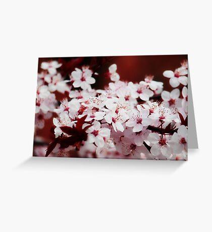 Cherry blossoms VRS2 Greeting Card