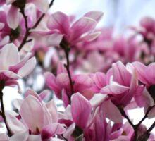 magnolia dreams Sticker