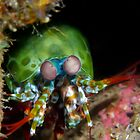 Crazy Eyed Critter by Philmed