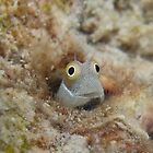 Smiley Little Fish by Philmed