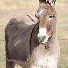 A Little A$$! by Kathi Arnell
