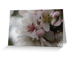 Almond Blossom White and Delicate Sierra Espuna Greeting Card