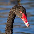 Black Swan, QLD, Australia by LizSB