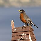 Robin by Kathi Arnell