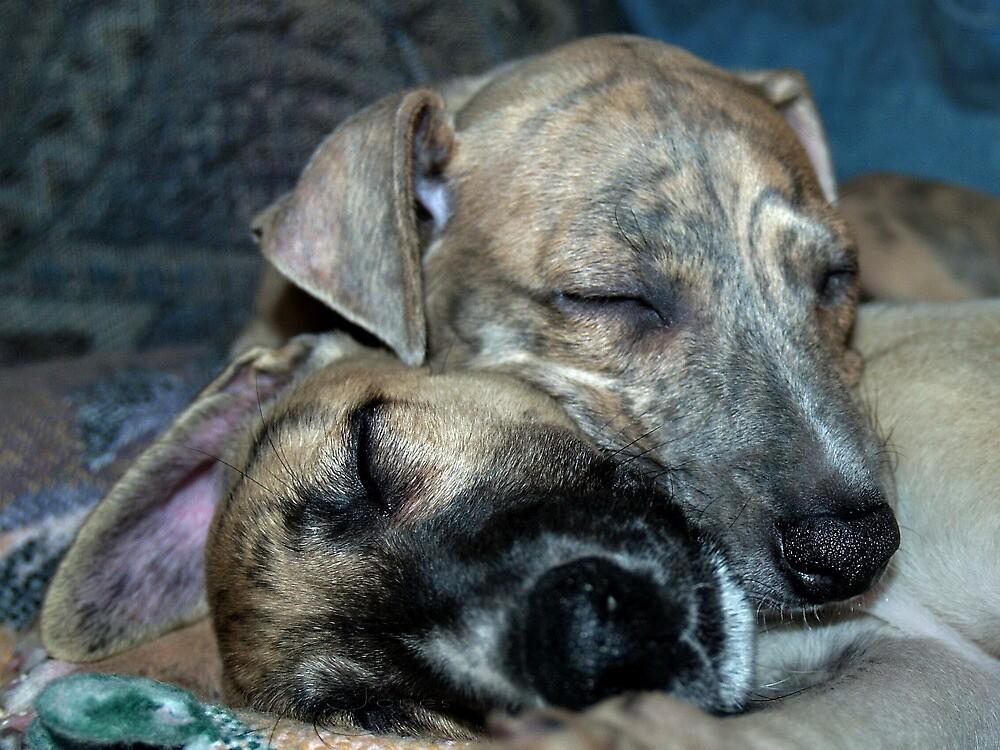"""Cuddle Snooze"" by Gail Jones"
