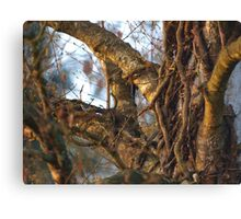 Ivy Roots in the Tree VRS2 Canvas Print