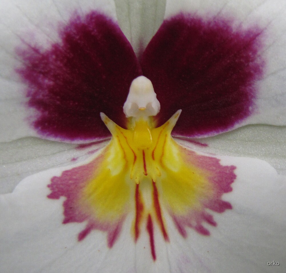 Butterfly in Orchid by orko
