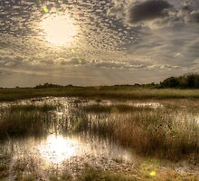 Everglades Afternoon by Bill Wetmore