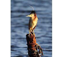"""Pole Sitter"" Photographic Print"