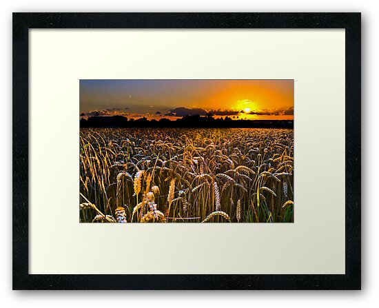 Across the wheat field.. by buddybetsy