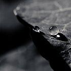 Drop light  by IamPhoto