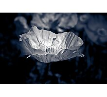 Poppy IV Photographic Print