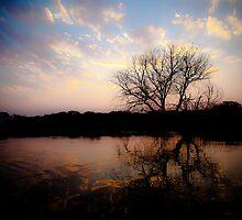 Sunset on the Okavango River by IamPhoto