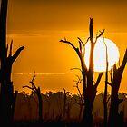 Lake Mulwala Sunset by djzontheball