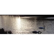 Sunset Swans Photographic Print