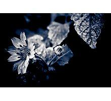 Garden life  Photographic Print