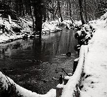 Winter in Castle Eden No.6 by Paul Berry