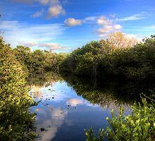 Everglades Pond by njordphoto