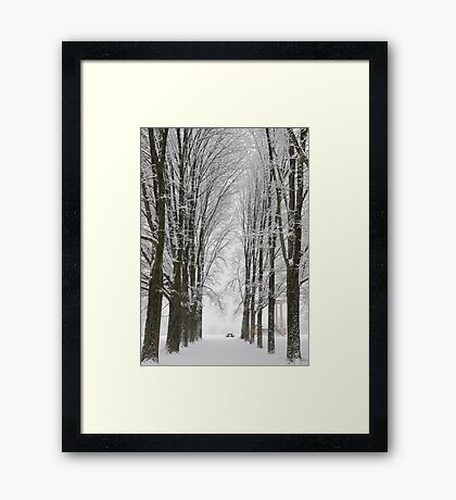 Winter Couloir Of Trees Framed Print