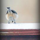 Birdie Bum ~ by Renee Blake