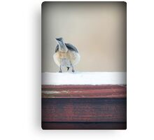 Birdie Bum ~ Canvas Print
