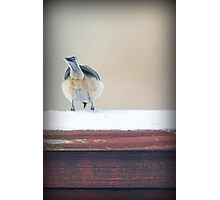 Birdie Bum ~ Photographic Print
