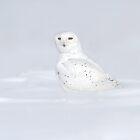 Sitting Pretty / Snowy Owl by Gary Fairhead