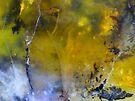Woodland Magic Hour (Rosella Opalite) by Stephanie Bateman-Graham