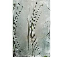 Lake Grass Photographic Print