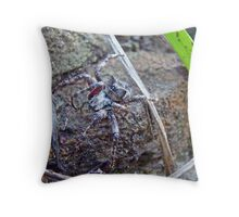 Old Man of the Woods - Orb Weaver Spider Throw Pillow