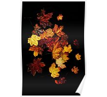 Autumn Colour Poster