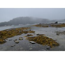 Seal's Cove Photographic Print