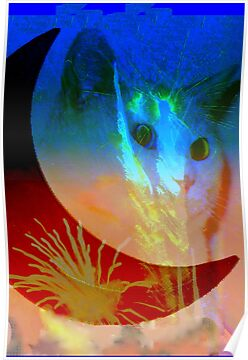 Celestial cat by ♥⊱ B. Randi Bailey