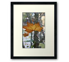 Maple leave Autumn Framed Print