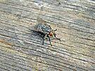 I Spy A Fly - Diptera by MotherNature