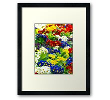 Colorful Primroses VRS2 Framed Print