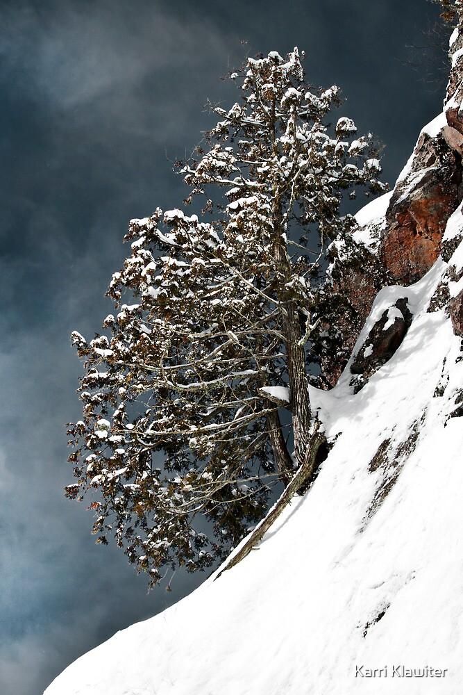 Lone Tree by Karri Klawiter