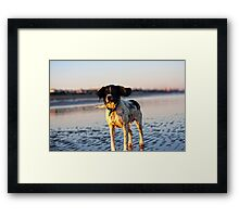 Benson ready to fly Framed Print