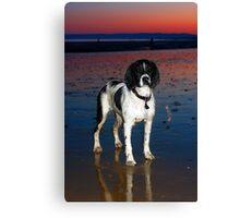 benson at cooden beach - sunset Canvas Print