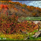 Old barn in the fall by Bill Gorman