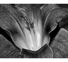 Gladiola In Black And White Photographic Print