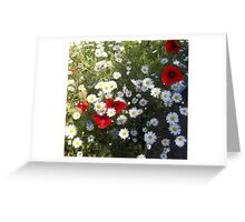 Flanders Poppies and Ox-Eye Daisies Greeting Card